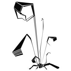 Animaloïde