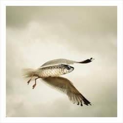 essai photosho goeland-sardine85